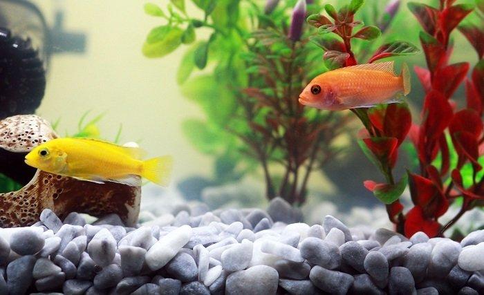light spectrum for aquarium plants