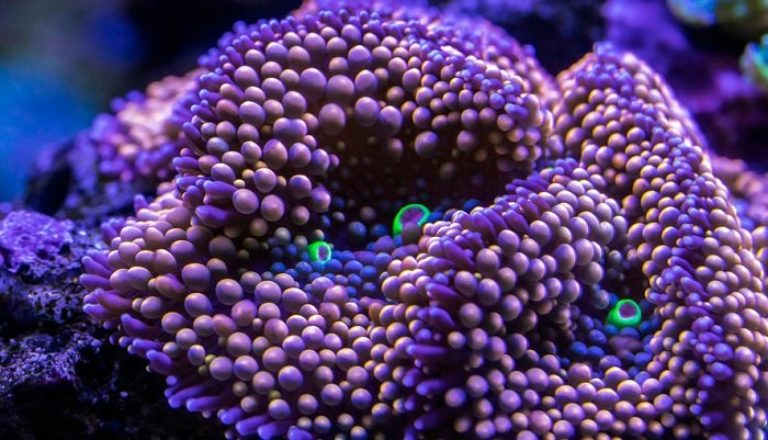 Do corals need white light