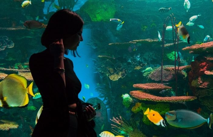 Best aquarium lighting for fish color, Aquarium Lighting 101: How to Choose The Best Aquarium Lighting for Fish Color?,
